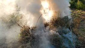 Fire fire burns twigs. And wood stock footage