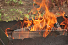 Fire on firewood. Burning firewood in a brazier for shish kebab preparation Royalty Free Stock Photos