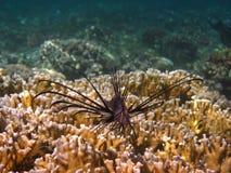 Fire fish camera Royalty Free Stock Photo