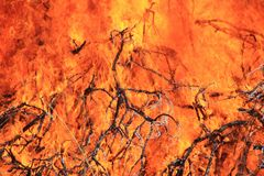 Fire and Flame Background - Beautiful Colors and Golden Heat Stock Images