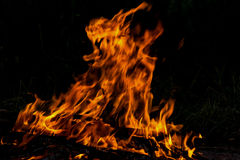 Fire flame bonfire spurts Royalty Free Stock Images