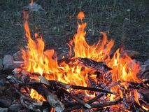 Fire. Flame of fire in a forest on the camping Royalty Free Stock Photos