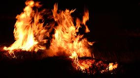 Fire flame isolated on black background stock video