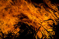 forest Fire flame Stock Photo