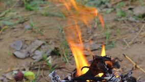 Fire flame in nature