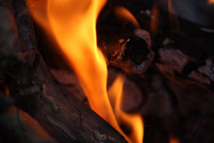 Fire and flames. In campfire - closeup Stock Images