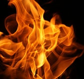 Fire flames. On a black background Stock Photography
