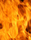 Fire flames. On a black background royalty free stock photography