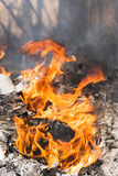 Fire flames around black tree log Stock Images
