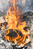 Fire flames around black tree log Stock Photo