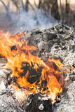 Fire flames around black tree log Royalty Free Stock Photos
