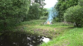 Fire flames burn near forest trees on pond lake shore in summer. 4K stock video