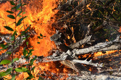 Fire flames burning trees Royalty Free Stock Images