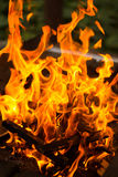 Fire flames on dark background Stock Photos