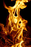Fire flames at dark night Stock Image