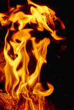Fire flames at dark night Royalty Free Stock Image