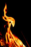 Fire flames at dark night Stock Images