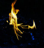 Fire flames. Of oil palm burning on dark background Royalty Free Stock Images