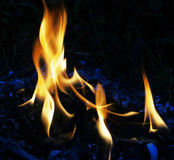 Fire flames. Of oil palm burning Stock Image