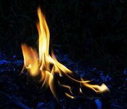 Fire flames. Of oil palm burning Royalty Free Stock Images