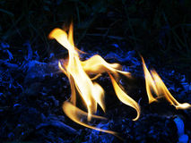 Fire flames. Of oil palm burning Royalty Free Stock Photo