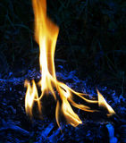 Fire flames. Of oil palm burning on dark background stock images