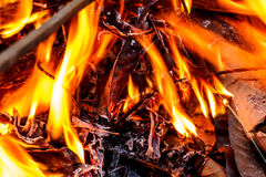 Fire flames. Flames in a pile of firewood Royalty Free Stock Images