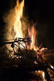 Fire flames and pine tree brunch burning Royalty Free Stock Photo