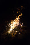 Fire flames and pine tree brunch burning Stock Images