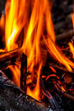 Fire flames. Flames in the waste pile Stock Photography