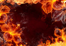 Fire flower. Fire frame with burning hibiscus flowers Stock Photography