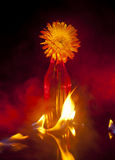 Fire Flower Stock Image