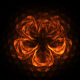 Fire flower. Orange fire flower abstract Royalty Free Stock Photos