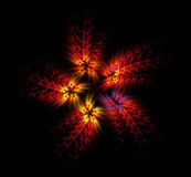 Fire flower. Five-petal red flower fractal on black background Royalty Free Stock Photos