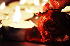 Fire and flower. Symbolic picture to the topic of beauty in the combustion flame of feelings Stock Photography