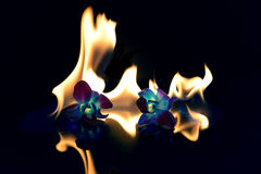 Fire flowers. This is a creative shot of flowers on fire Royalty Free Stock Photography