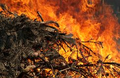 Fire, force of Nature Stock Photography