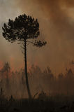 Fire and forest Stock Images