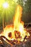 Fire in a forest Stock Image
