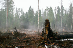 After a fire in the forest Stock Photo