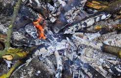 Fire in the forest. Fire and coals in the forest for camping grill, dinner stock images