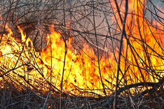 Fire in the forest. With big flame and smoke royalty free stock photo