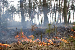 A fire in forest. Royalty Free Stock Photos