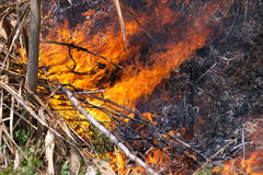 Fire in forest Stock Photo