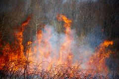 Fire of the forest Stock Photo