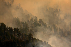 Fire in the forest. Of La Palma (Spain royalty free stock image