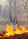 Fire in a forest. In summertime royalty free stock images