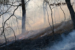 Fire in Forest 3. A fire in leafy forest. Autumn. Russian Far East stock images
