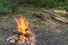 A fire. In the forest Royalty Free Stock Photo