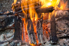 A fire. In the forest Royalty Free Stock Images